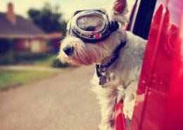 5-tips-traveling-pet
